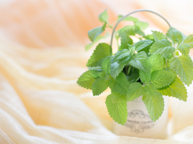 Plants&goods Lim
